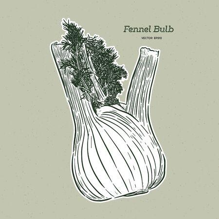 Hand drawn fennel Vector illustration - Vector