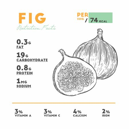Nutrition facts of fig, hand draw sketch vector. Çizim