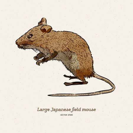 The large Japanese field mouse (Apodemus speciosus), hand draw sketch vector.