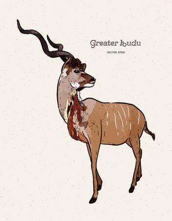 greater kudu antelope, hand drawn vector illustration.