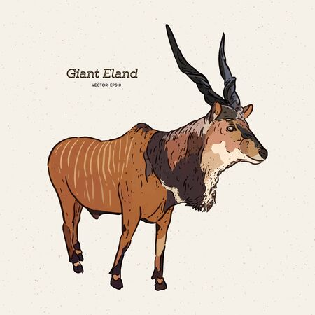 The giant eland (Taurotragus derbianus), also known as the Lord Derby eland, hand draw sketch vector. Stock Vector - 132663847