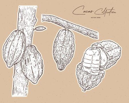 cacao, hand draw sketch vector.
