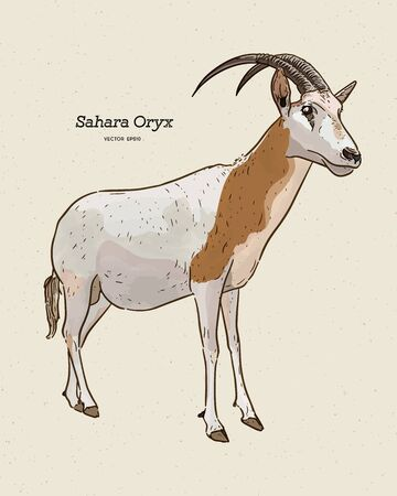 The scimitar oryx or scimitar-horned oryx, also known as the Sahara oryx, hand draw sketch vector. Ilustração