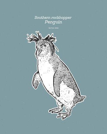 Southern Rockhopper Penguin is a bird in the Spheniscidae family of penguins, vintage line drawing vector. Illusztráció