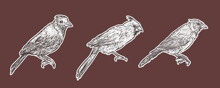Set of Cardinal Birds, hand draw sketch vector. Ilustração
