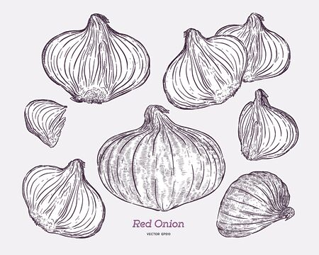 Red onion collection, hand draw sketch vector.