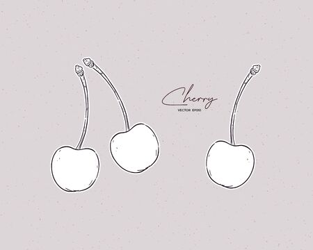 Cherry vector drawing set. Summer fruit engraved style illustration.