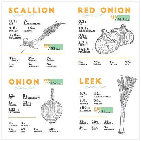 Nutrition facts of Red and yello onion, scallion and leek. Hand draw sketch vector.