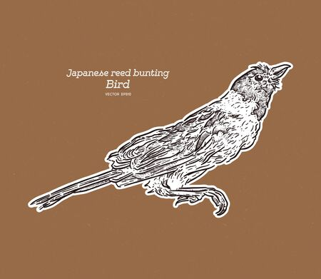 The Japanese reed bunting or ochre-rumped bunting is a species of bird in the family Emberizidae. It is found in Manchuria, Korea and Japan. Hand draw sketch vector. Ilustração