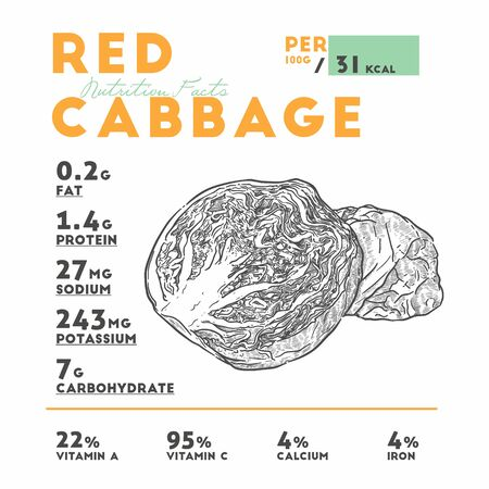 Nutrition of red cabbage, hand draw sketch vector.