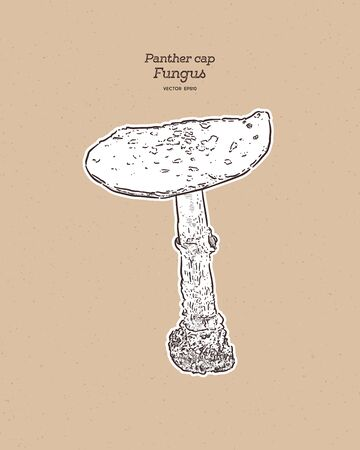 Amanita pantherina, also known as the panther cap and false blusher due to its similarity to the true blusher (Amanita rubescens), is a species of fungus. Hand draw sketch vector.