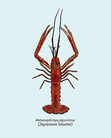 Metanephrops japonicus is a species of lobster found in Japanese waters, hand draw sketch vector.