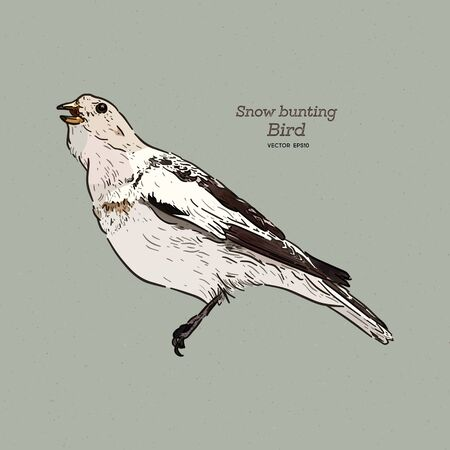 The snow bunting is a passerine bird in the family Calcariidae. It is an Arctic specialist, hand draw sketch vector.