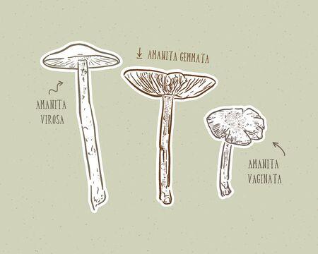 Fungus set, hand draw sketch vector.