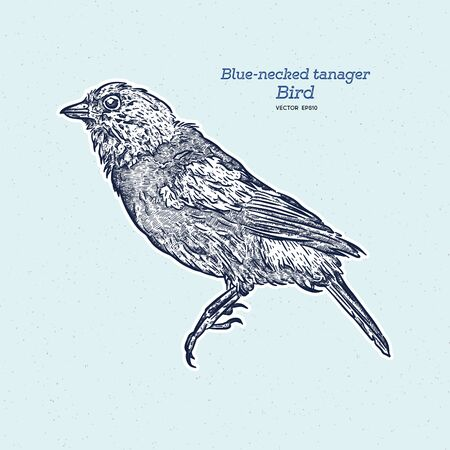 The blue-necked tanager is a species of bird in the family Thraupidae. Hand draw sketch vector.