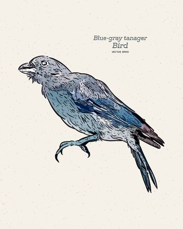 The blue-gray tanager (Thraupis episcopus) is a medium-sized South American songbird of the tanager family, hand draw sketch vector.