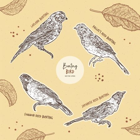 Set of bunting bird, hand draw sketch vector. Illustration