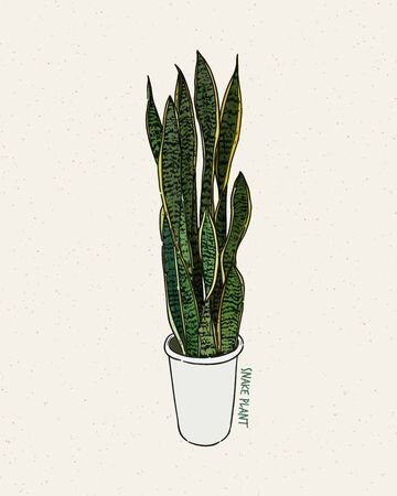 Dracaena trifasciata is a species of flowering plant in the family Asparagaceae, hand draw sketch vector. Иллюстрация