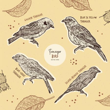 Tanager birds collection, hand draw sketch vector. Small bird set.
