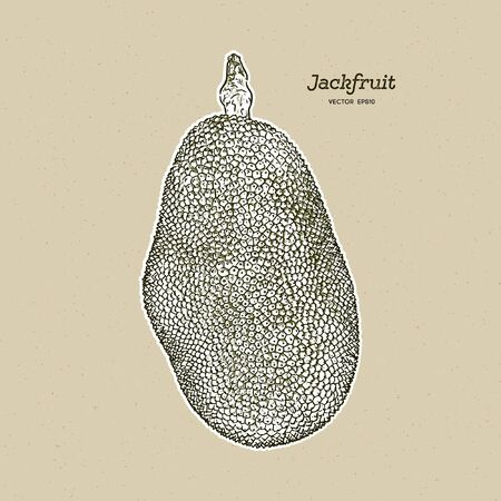 The jackfruit, also known as jack tree, hand draw sketch vector. Иллюстрация