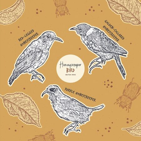 Honeycreeper birds collection, hand draw sketch vector.