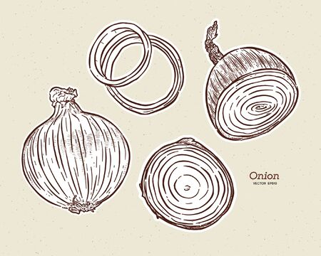 Onion, hand draw sketch vector. 向量圖像