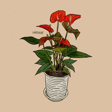 Anthurium, is a genus of about 1000 species of flowering plants, the largest genus of the arum family, Araceae. General common names include anthurium, tailflower, flamingo flower, and laceleaf. Hand draw sketch vector