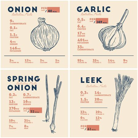 Nutrition facts of onion, garlic, spring onion and leek. Bulbs vegetable, hand draw sketch vector