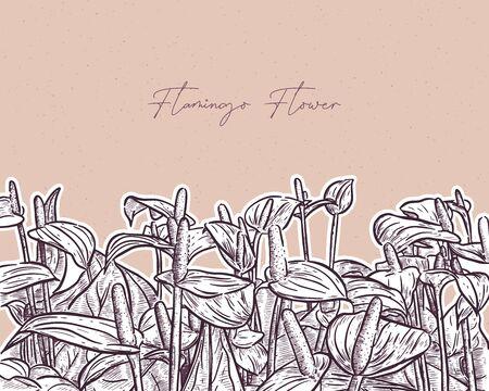 Flamingo flower or laceleaf, hand draw sketch vector. 向量圖像