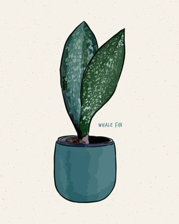 Sansevieria Masoniana - Whale Fin Snake Plant-Paddle Plant. Hand draw sketch vector.