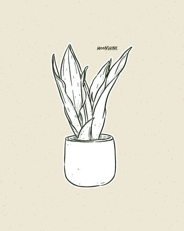 Sansevieria moonshine is a cultivar of the Sansevieria trifasciata, which is a succulent from the Asparagaceae family. Hand draw sketch vector. Иллюстрация
