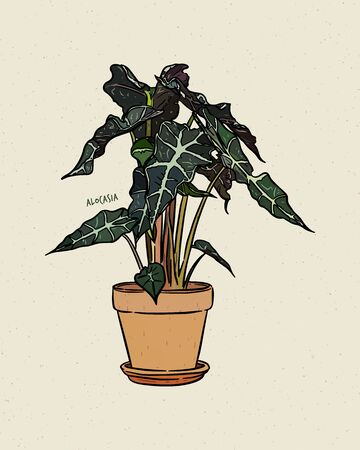 Alocasia is a genus of broad-leaved rhizomatous or tuberous perennial flowering plants from the family Araceae. Hand draw sketch vector.