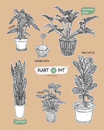 Plant in pots, hand draw sketch vector. Illustration