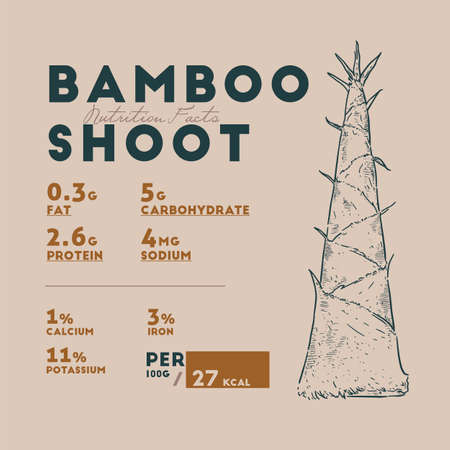 Nutririon fact of bamboo shoot, hand draw sketch vector.