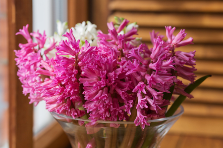 Pink hyacinth in a clear vase on the window