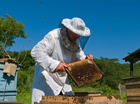 A beekeeper in veil at apiary among hives. Summer, sunny day. Russian Far East, Primorye. Stock Photo