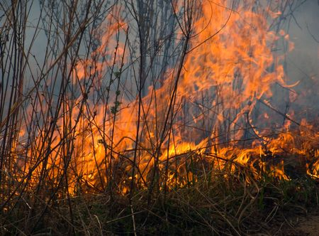 A brush fire. A close-up of the flame. Russian Far East. Primorsky Region.