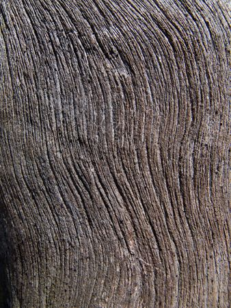 woodsy: A close-up of texture of dry old tree without bark. Russian Far East, Primorye.
