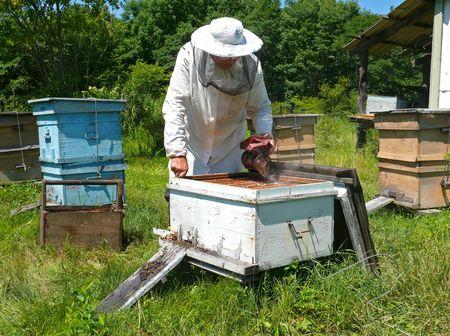 fumigador: Un velo de apicultor en colmenar entre colmenas. Verano, d�a soleado. Lejano Oriente ruso, Primorye.
