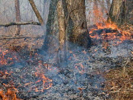 Un gros incendie de forêt au sol. Antérieure printemps. Extrême-Orient russe, Primorye. Banque d'images - 3630840