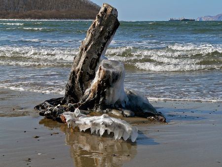 A barky stump on background of sea with weaves and surf. Russian Far East, Primorye, Japanese sea, Sokolovskaya bay.