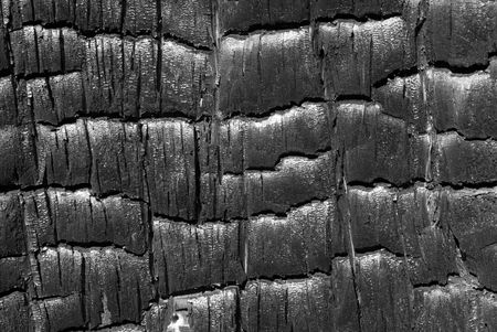 woodsy: A close-up of surface of burned tree. Russian Far East, Primorye. Stock Photo