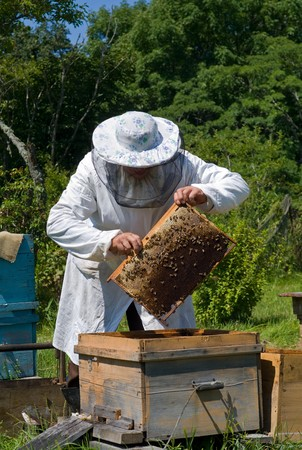 apiary: A beekeeper in veil at apiary among hives. Summer, sunny day.