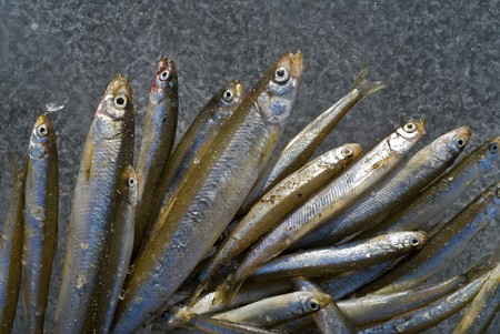 smelt: A close-up the fishes smelt on ice of river. Stock Photo