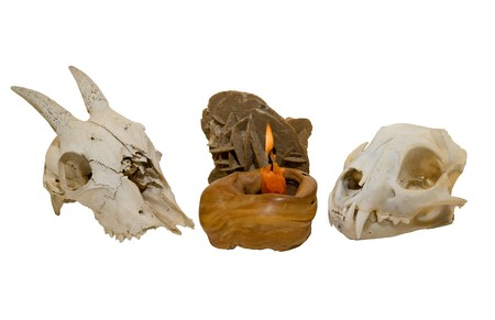 Two skulls of animals and fossil at the burned candle. Stock Photo - 4322678