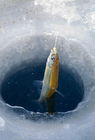 A close-up of the fish on hook in hole in ice. A winter fishing of a smelt. Stock Photo