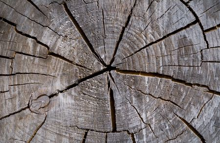 A close-up of the surface of old cut of tree. Stock Photo