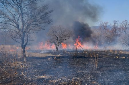 waif: A brushfire at woodside. Early spring. Stock Photo