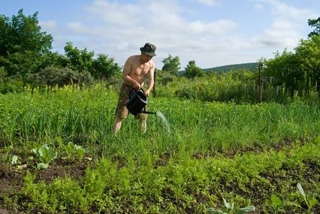 A man perfuse vegetables with  sprinkling can on garden. photo
