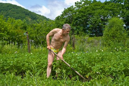 A man weeds garden-bed with hoe. photo